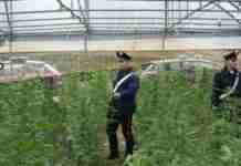 la piantagione di curinga