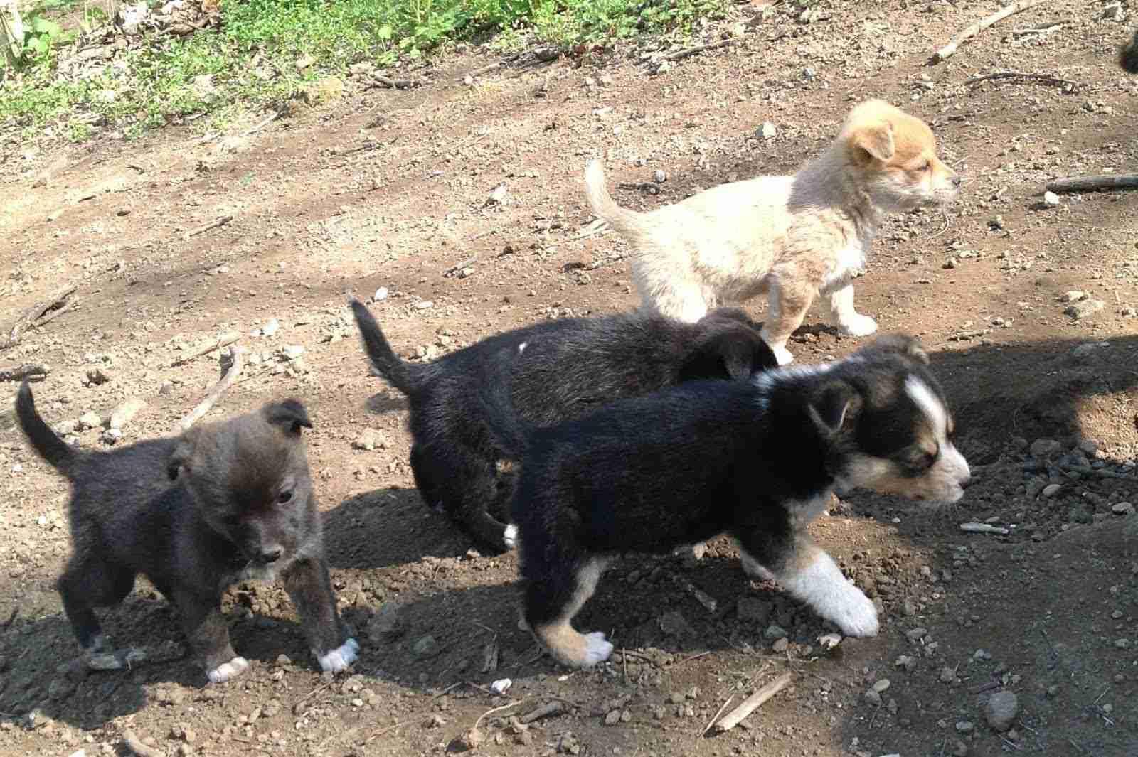 Salvati Sei Cuccioli Di Cane Abbandonati Nel Parco Daspromonte